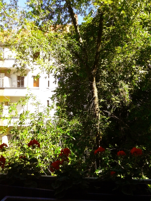 The big tree in front of my window & balcony