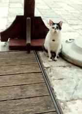 I am Cat! © trashbus/Renata Britvec, 2013