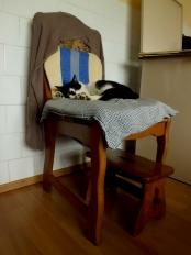 cat I © trashbus/Renata Britvec, 2014