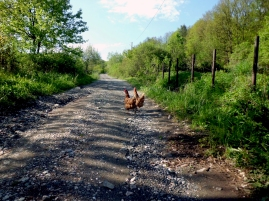 chickens I, Lipnica, 2014 © trashbus/Renata Britvec, 2014