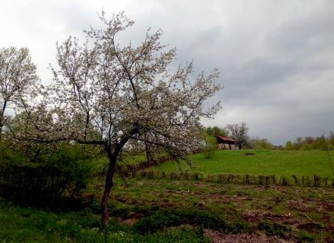 blossoms © trashbus/Renata Britvec, 2014
