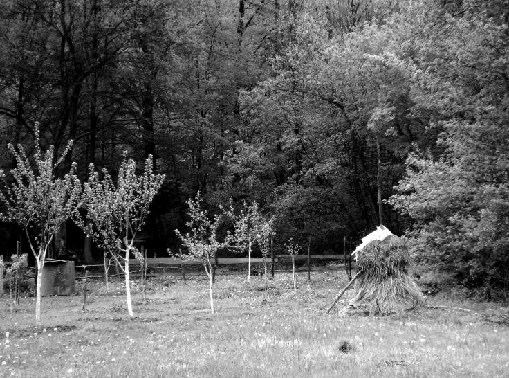 haystack © trashbus/Renata Britvec, 2014