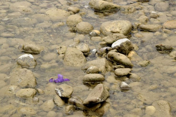 Purple Crocus II. The River Told Me About It. River Lech, Augsburg, Germany. 2018. © Trashbus ǀ Renata Britvec