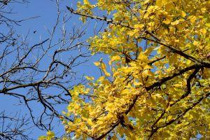 Branches and Leaves. Fall. Short Hellos & Long Goodbyes. LipnicaTuzla, BiH. 2017 © Trashbus ǀ Renata Britvec