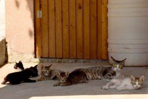Micika and Her Kittens. Short Hellos & Long Goodbyes. LipnicaTuzla, BiH. 2017 © Trashbus ǀ Renata Britvec