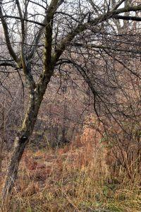 Naked Tree. Winter. Short Hellos & Long Goodbyes. LipnicaTuzla, BiH. 2017 © Trashbus ǀ Renata Britvec