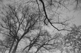 Branches in Sky. Ghost Night. Berlin, 2020. © Trashbus ǀ Renata Britvec