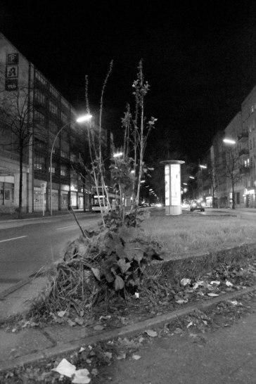 Urban Plant. Ghost Night. Berlin, 2020. © Trashbus ǀ Renata Britvec