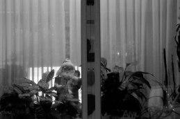 Window Santa. Ghost Night. Berlin, 2020. © Trashbus ǀ Renata Britvec